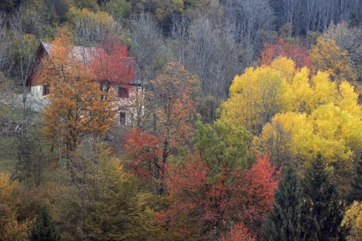 Foliage in Carnia: 2 itineraries not to miss the autumn show