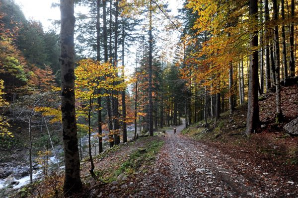 Il tratto iniziale del sentiero che conduce al Lago Bordaglia – foto di Gigliola Di Piazza –