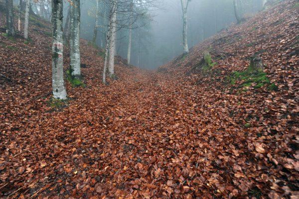Attraversando i boschi di Tualis e Comeglians – foto di Gigliola di Piazza –