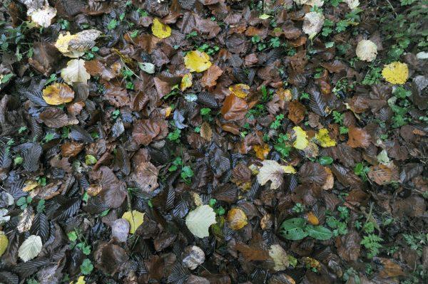 Autunno attraverso i colori delle sue foglie – foto di Gigliola di Piazza –