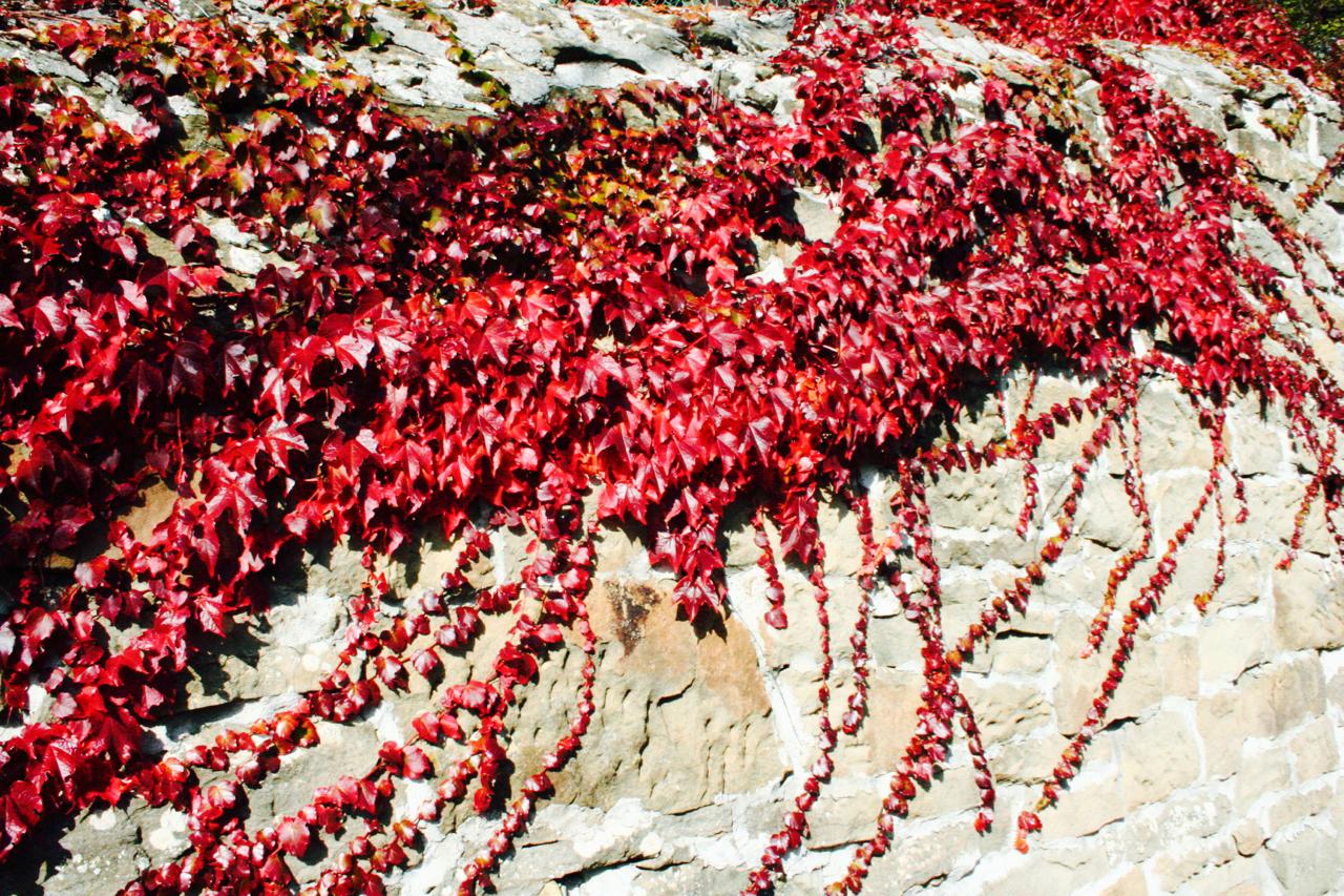 autunno-e-sapori-del-carso-12