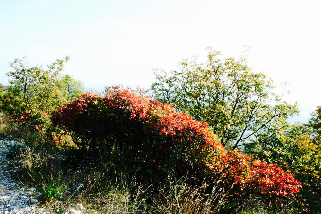 autunno-e-sapori-del-carso-23