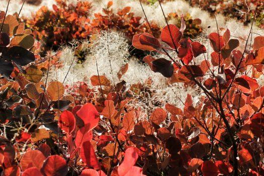 Una domenica d'autunno nel Carso triestino