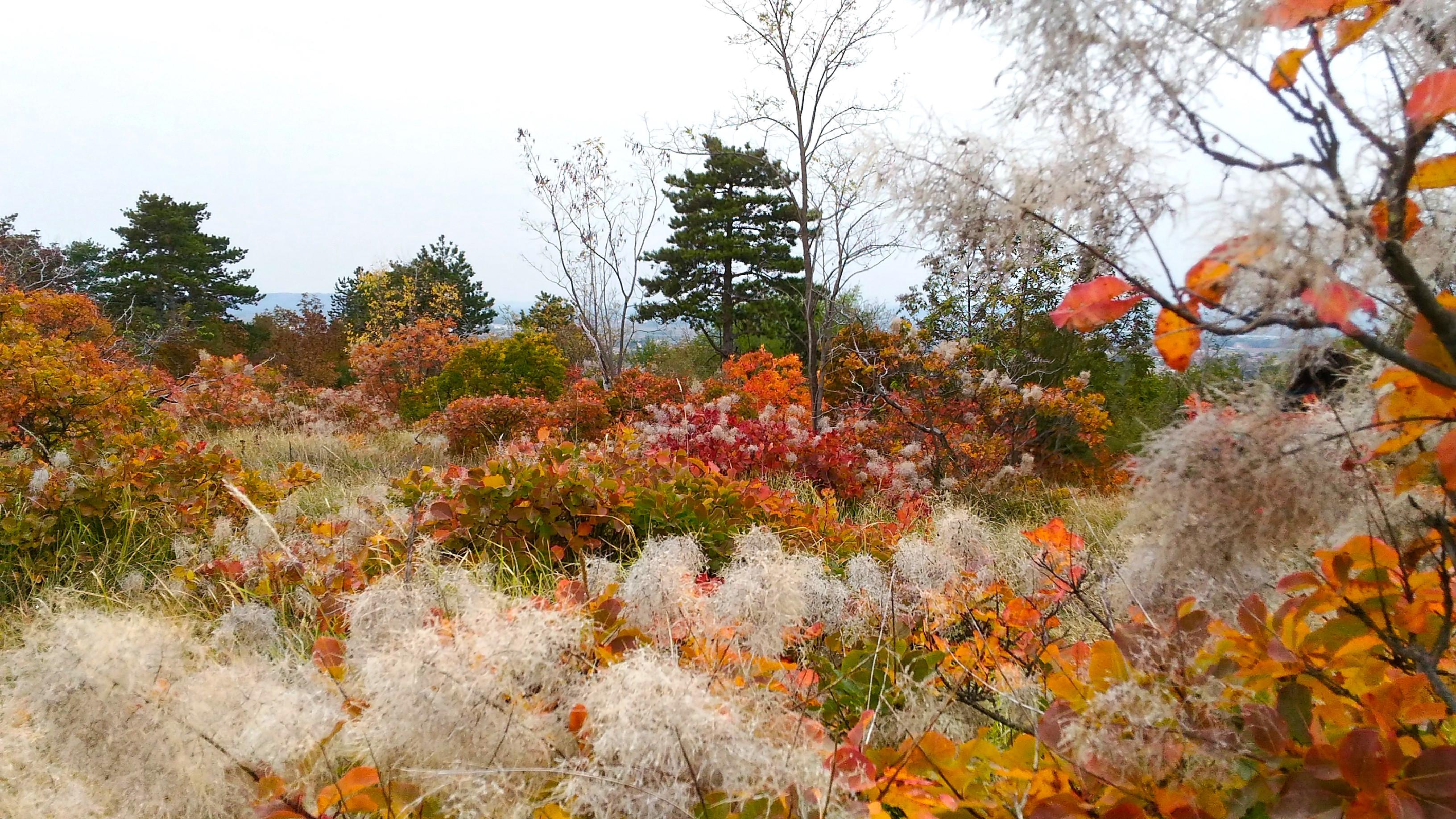 autunno-e-sapori-del-carso-4