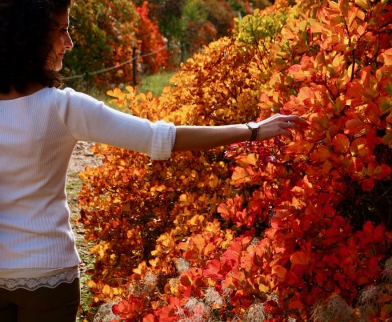 Autumn in Carso, where the roots have the colour of Sommaco and the fragrance of Glera