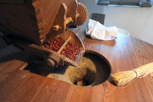 Sua maestà la Polenta. A Socchieve, la farina si tramanda da 3 generazioni