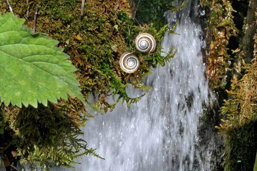 Percorso Kneipp a cielo aperto: idroterapia nel bosco di Maranzanis