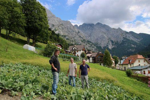La rinascita del cavolo cappuccio di Collina: dal rischio estinzione a Presidio Slow Food